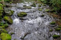 Forge Creek