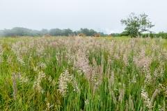 Meadow grasses.