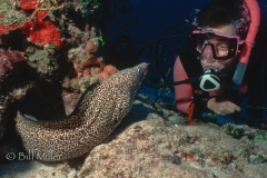 Spotted Moray and Sandy