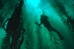 Sandy Silhouetted in the Kelp Forest